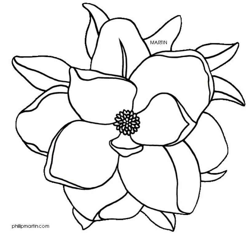 Magmolia clipart vector library library Collection of Magnolia clipart   Free download best Magnolia ... vector library library