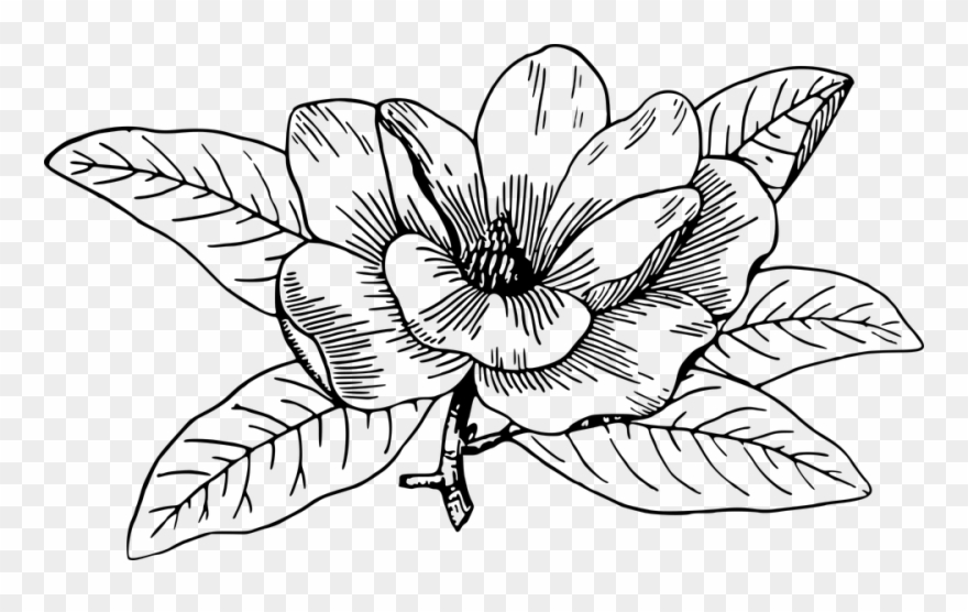 Magnolia clipart black and white clip royalty free library Flower Line Art 28, Buy Clip Art - Magnolia Flower Big ... clip royalty free library