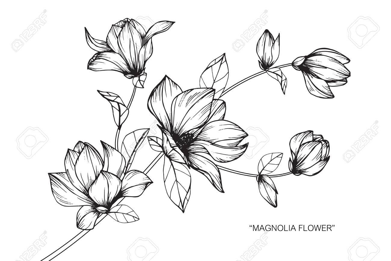 Magnolia clipart black and white png freeuse Magnolia clipart black and white 6 » Clipart Portal png freeuse