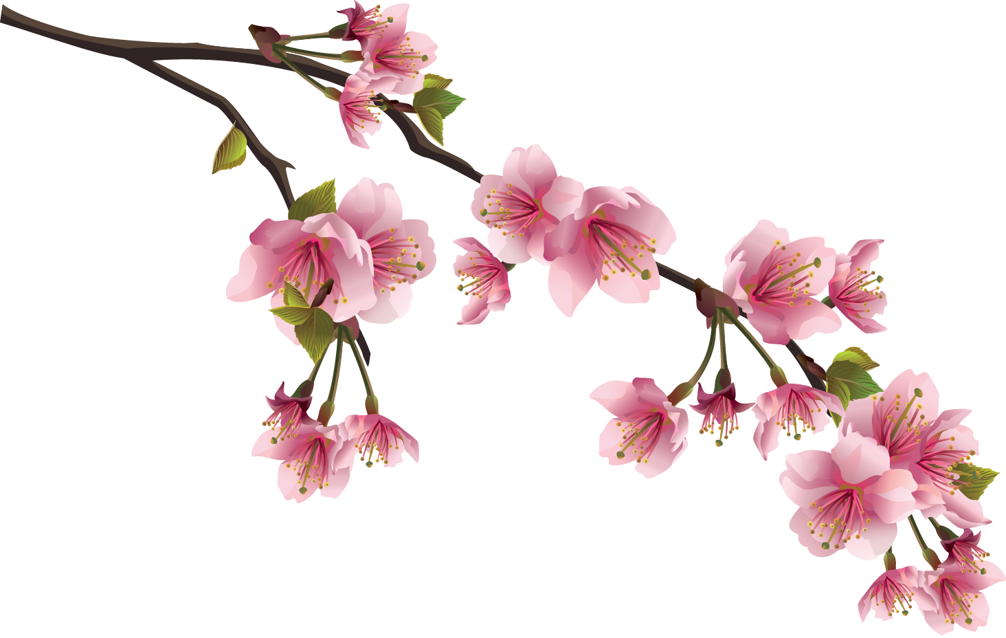 Magnolia flower clipart banner freeuse library Afbeeldingsresultaat voor png branch | plant png | Pinterest banner freeuse library