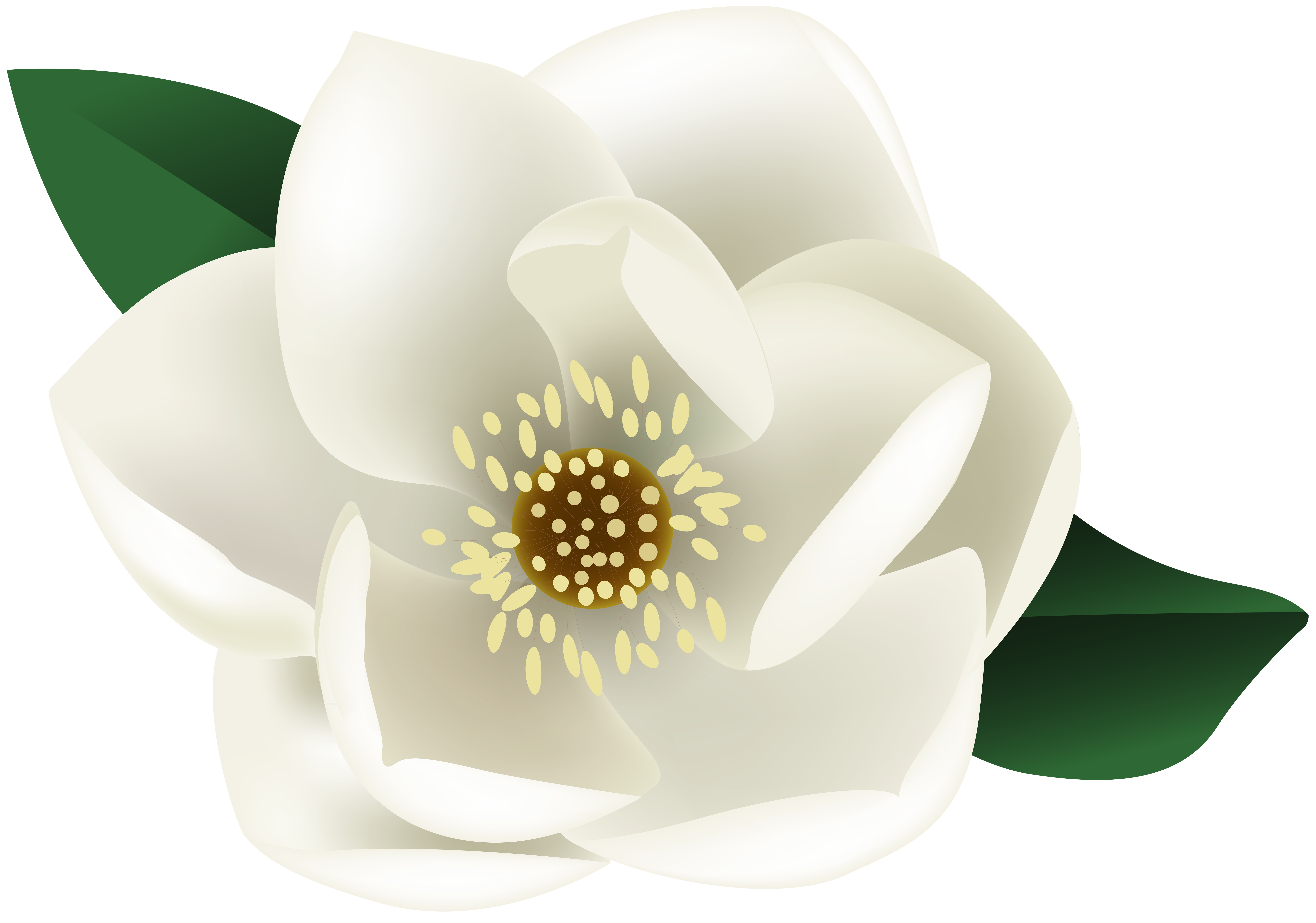Magnolia flower clipart library White Magnolia Flower PNG Clip Art Image | Gallery Yopriceville ... library