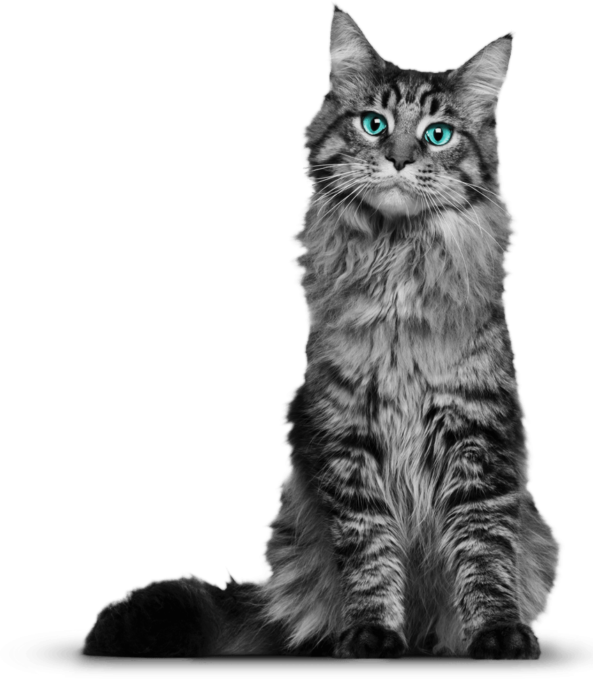 Maine coon cat clipart vector black and white library Cat Png 3 vector black and white library
