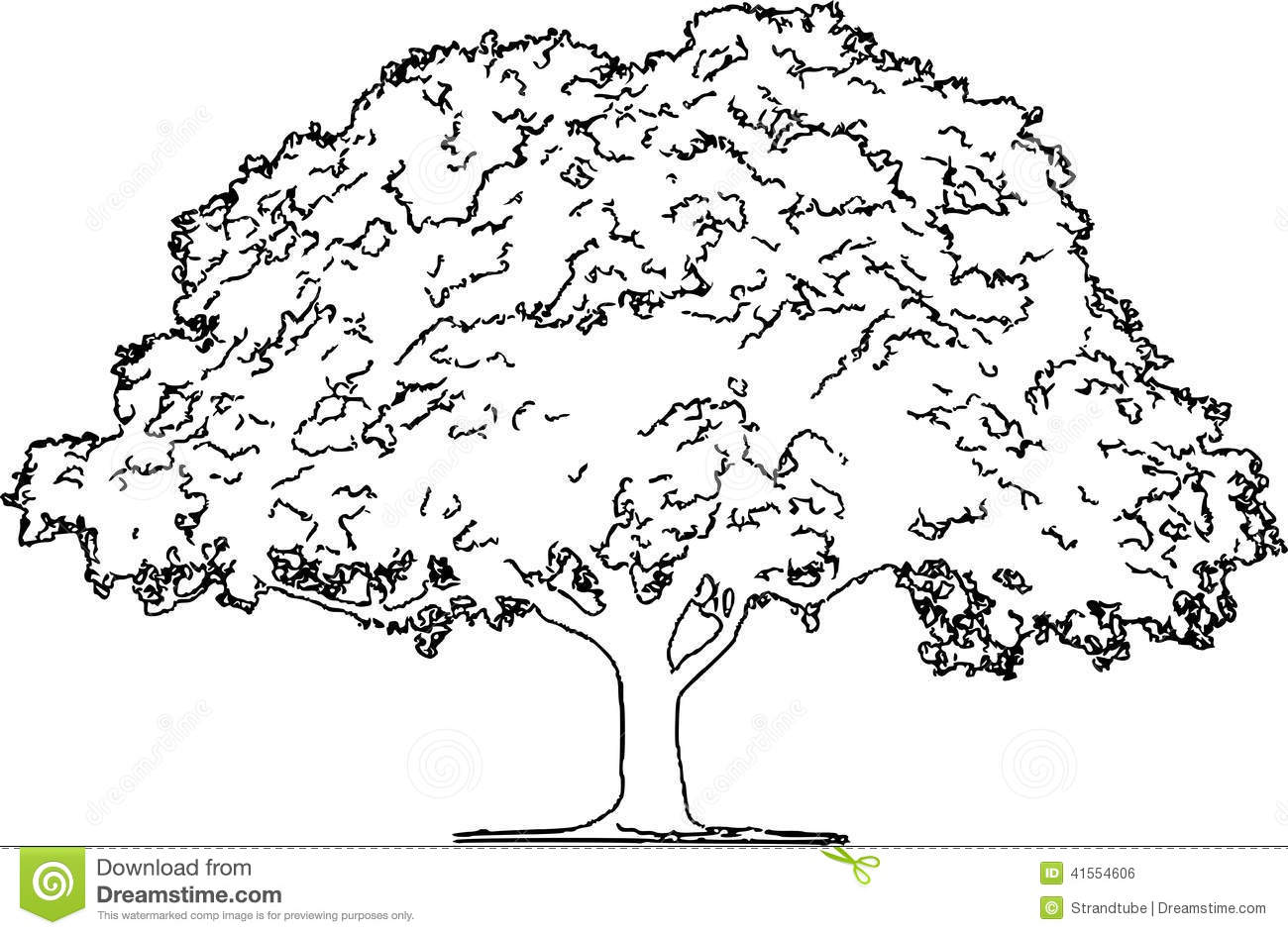 Major oak leaf clipart black and white image transparent Black And White Tree Sketch at PaintingValley.com | Explore ... image transparent