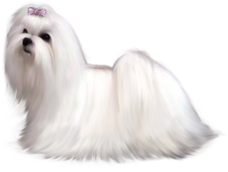 Water dog clipart library Painted Maltese Dog PNG Clipart Picture   Gallery Yopriceville ... library