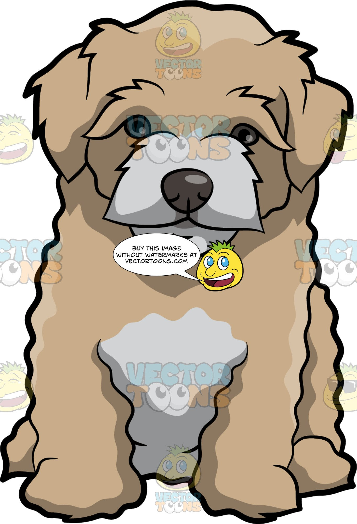 Maltipoo clipart clip black and white A Quiet Maltipoo Dog clip black and white