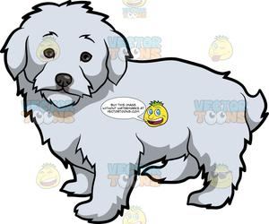 Maltipoo clipart png free An Adorable Maltipoo Dog png free