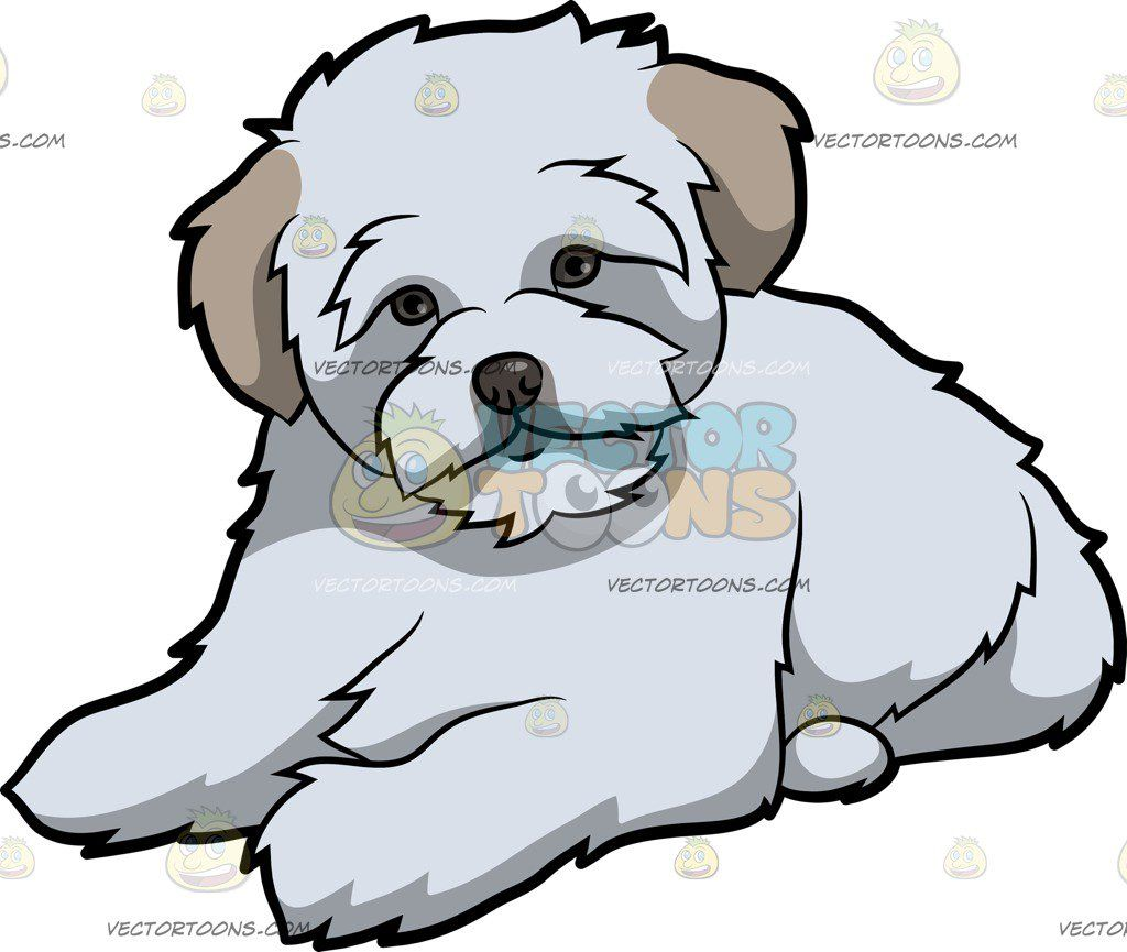 Maltipoo clipart clip art freeuse download Pin by Linda Miller Goforth on dog   Maltipoo dog, Maltipoo, Dogs clip art freeuse download