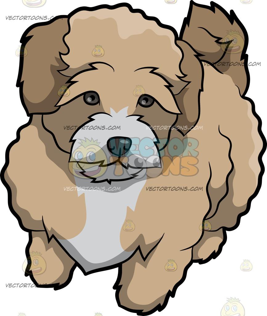 Maltipoo clipart clip black and white A Bashful Maltipoo Dog » Clipart Station clip black and white