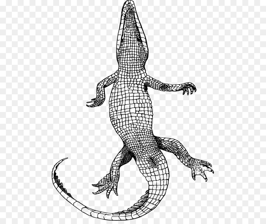 Mama and baby alligator clipart line drawing picture freeuse library Crocodile Line art Drawing Portable Network Graphics - american ... picture freeuse library