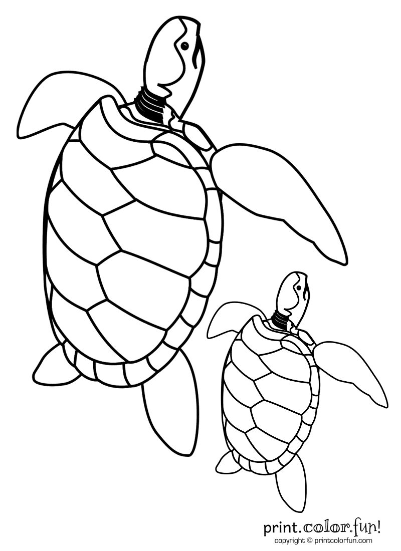 Mama and baby turtle clipart png freeuse Gallery For > Mom and Baby Turtle Clipart png freeuse