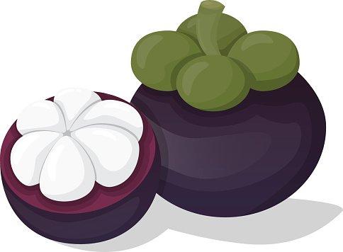 Mangosteen clipart svg free download Mangosteen Fruit premium clipart - ClipartLogo.com svg free download