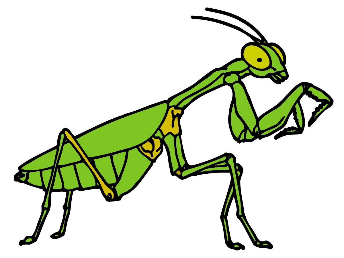 Mantis clipart free Best Mantis Clipart #24548 - Clipartion.com free