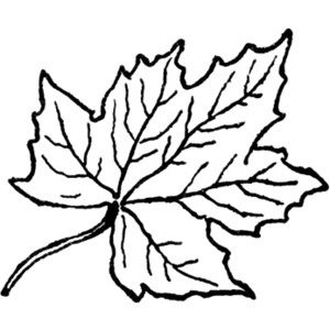 Maple leaf clipart black and white graphic freeuse download Leaves black and white maple leaf clipart black and white ... graphic freeuse download