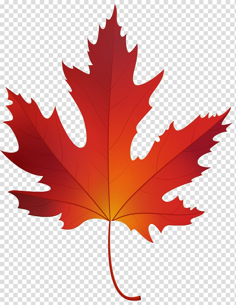 Maple sugar clipart jpg royalty free download Red maple Sugar maple Maple leaf , maple leaf transparent background ... jpg royalty free download
