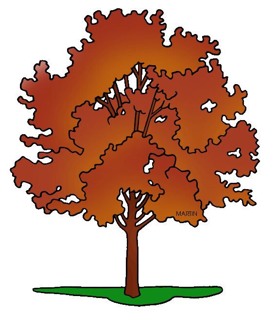 Maple tree clipart banner royalty free United States Clip Art by Phillip Martin, State Tree of Rhode Island ... banner royalty free