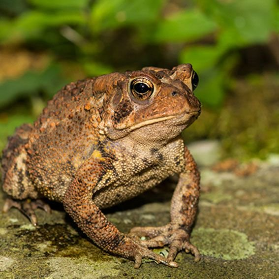 Mar riding on a big toad clipart transparent cultivationstreet hashtag on Twitter transparent