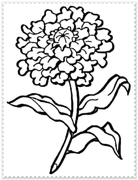 Marigold flower black and white clipart png free download Marigold Drawing | Free download best Marigold Drawing on ... png free download