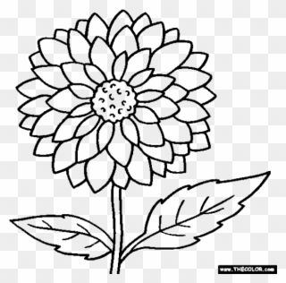 Marigold flower black and white clipart clip transparent stock Clipart Flowers Coloring - Outline Images Of Marigold - Png ... clip transparent stock