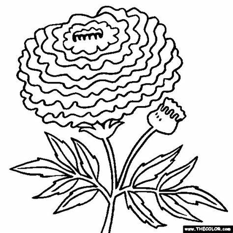 Marigold flower black and white clipart graphic library stock Marigold paintings search result at PaintingValley.com graphic library stock