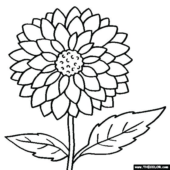 Marigold flower black and white clipart vector free stock marigold coloring page – antalyahavalimanitransfer.co vector free stock