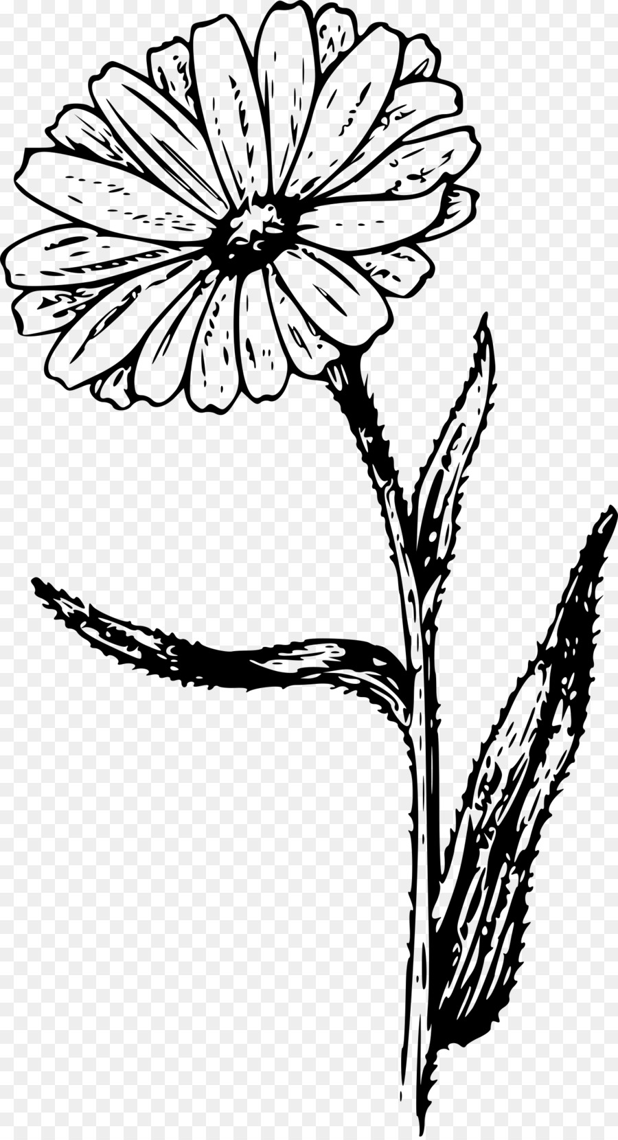 Marigold flower black and white clipart clip royalty free download Black And White Flower clipart - Flower, Drawing, Plant ... clip royalty free download