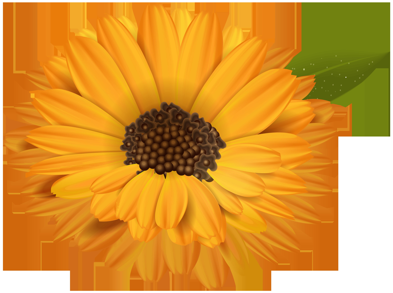 Marigold flower clipart jpg transparent download Orange Flower Transparent Clip Art Image | Gallery Yopriceville ... jpg transparent download