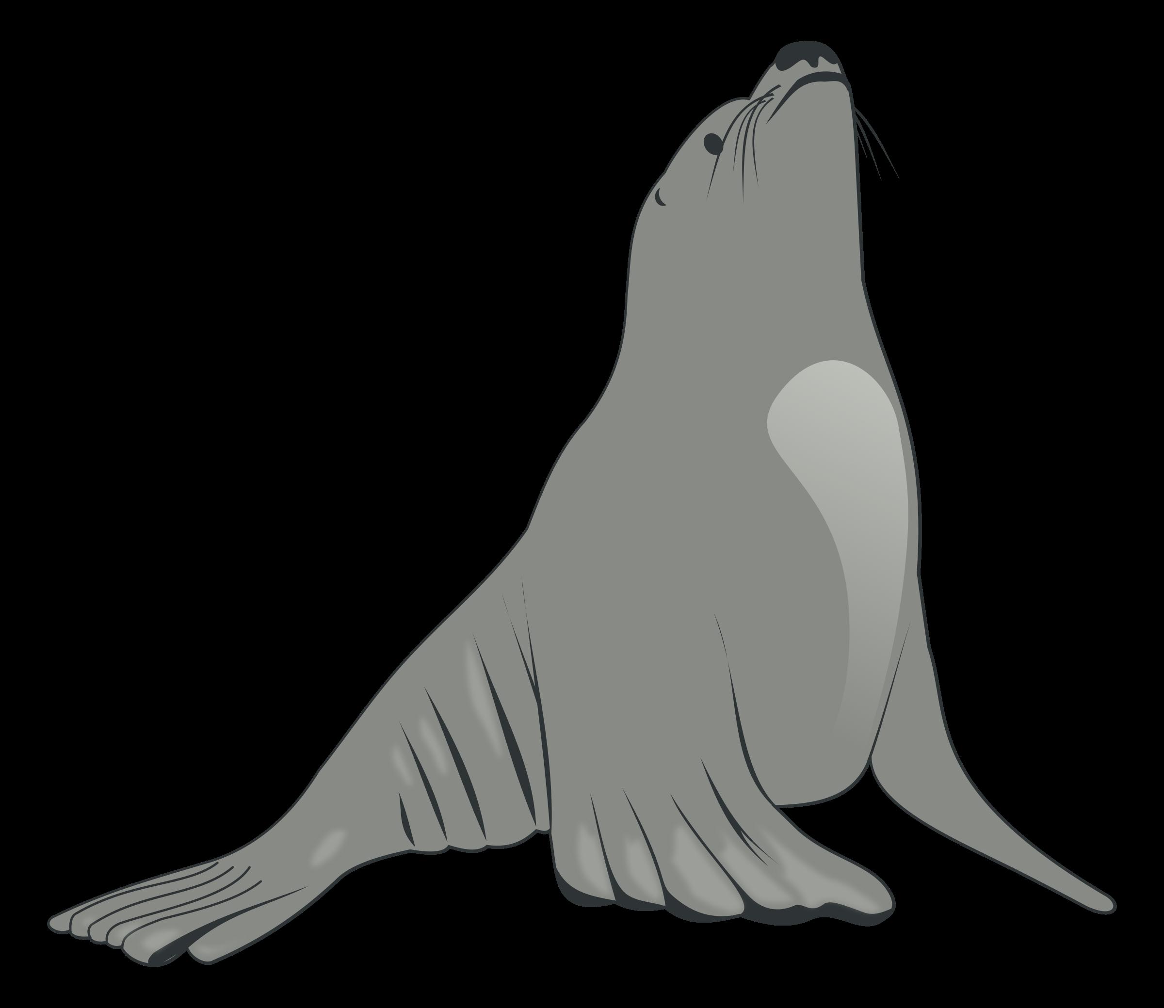 Clipart - Sea Lion clip free stock