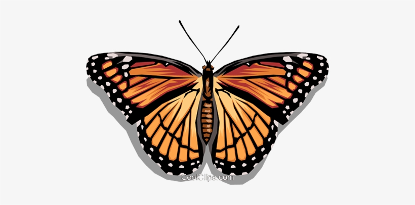Mariposa vector clipart svg black and white download Butterfly Royalty Free Vector Clip Art Illustration ... svg black and white download