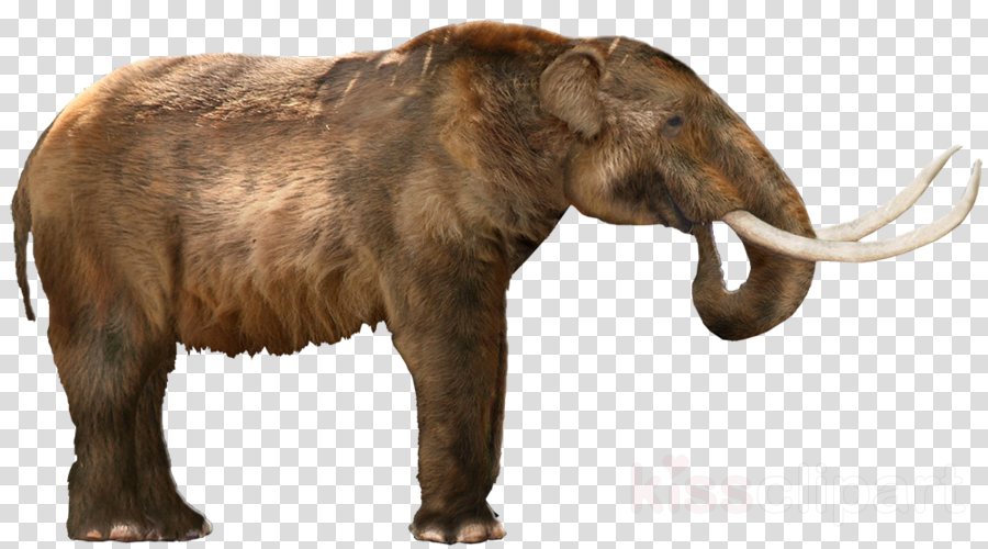 Mastodon clipart clip royalty free download Download mastodon png clipart Clip art clip royalty free download
