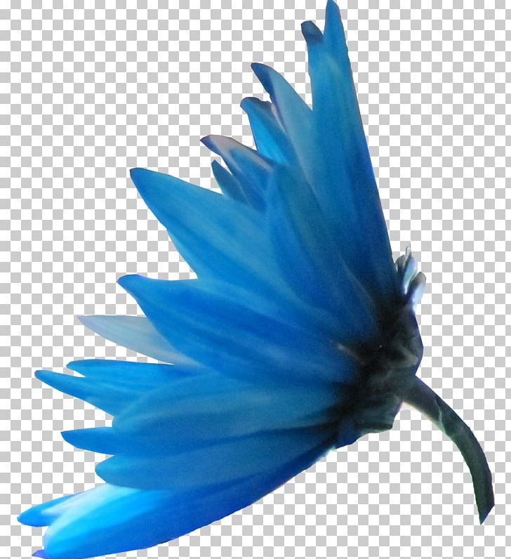 Mavi clipart image royalty free stock Blue Petal Flower Color Mavi PNG, Clipart, Blue, Cari, Color ... image royalty free stock