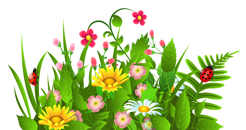 Image result for google images free spring border