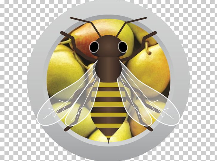 Mead clipart honey bee black and white clip art library Sweet Mead Traditional Mead Wine Honey Bee PNG, Clipart, Ahs ... clip art library