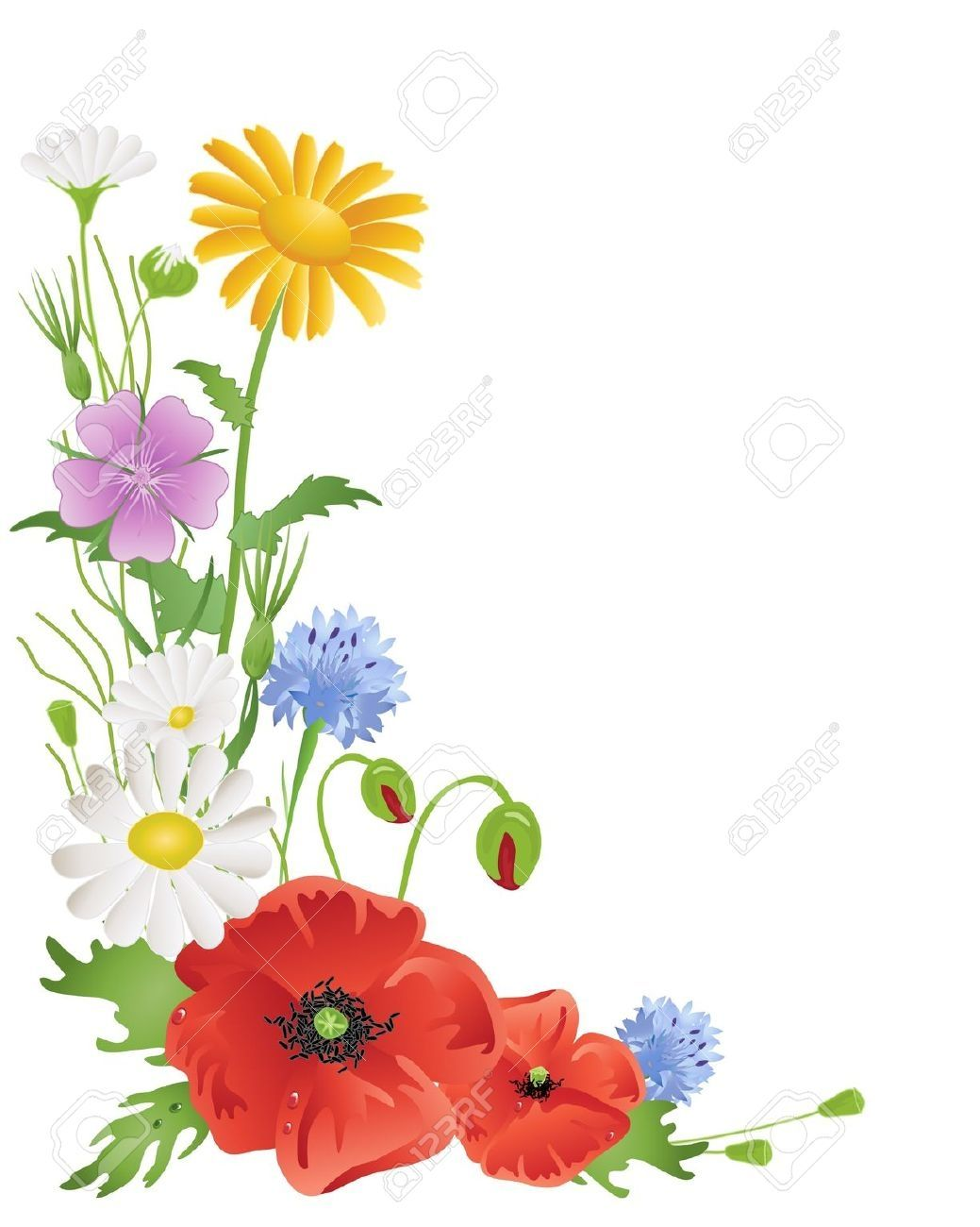 Meadow flower clipart clipart free drawings of a bunch of wild flowers   Wildflowers Borders ... clipart free