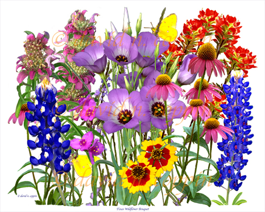 Wildflower clipart images picture free Free Wildflower Cliparts, Download Free Clip Art, Free Clip ... picture free