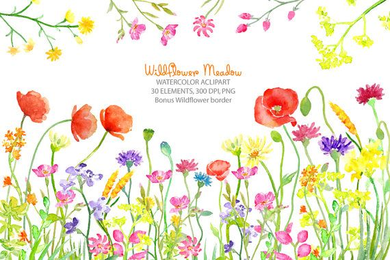 Meadow flower clipart png library Watercolor clipart - Wild flower meadow border instant ... png library