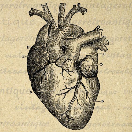 Medical artwork clipart vector freeuse library Digital Heart Diagram Graphic Printable Heart Image Medical ... vector freeuse library