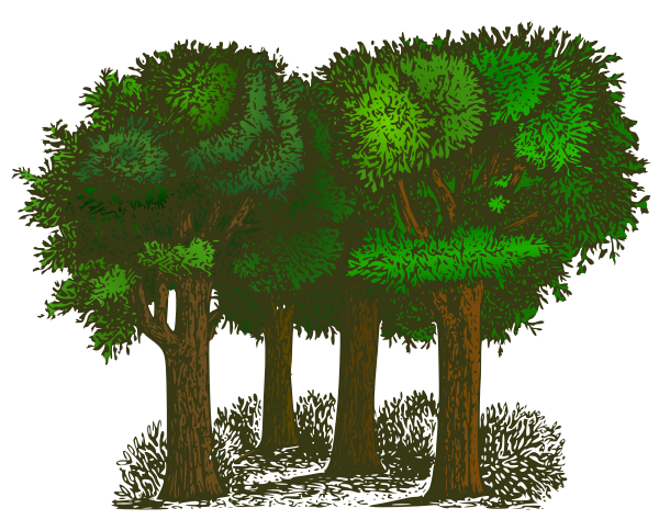 Medium size tree clipart graphic royalty free download Medium size tree clipart - ClipartFest graphic royalty free download