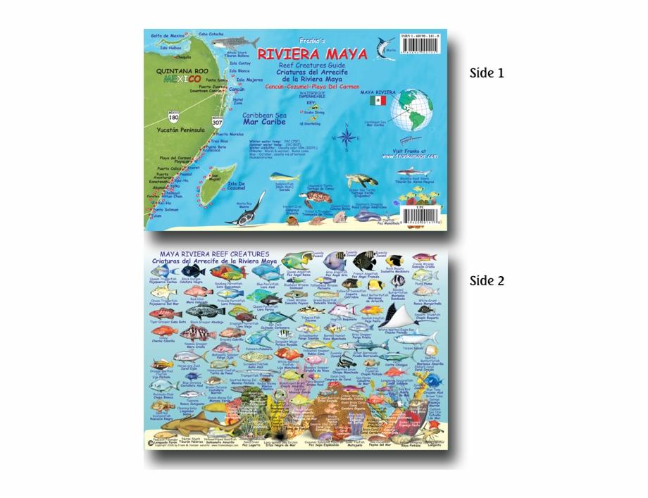 Mexico riviera maya clipart png jpg library stock 33115 Maya Riviera Fish Card - Fish Of Riviera Maya Free PNG ... jpg library stock