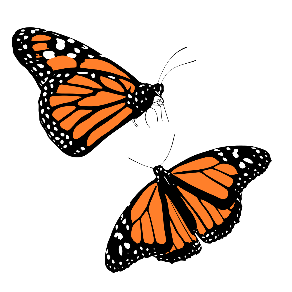 Microsoft clipart butterfly image royalty free OnlineLabels Clip Art - Monarch Butterflies image royalty free