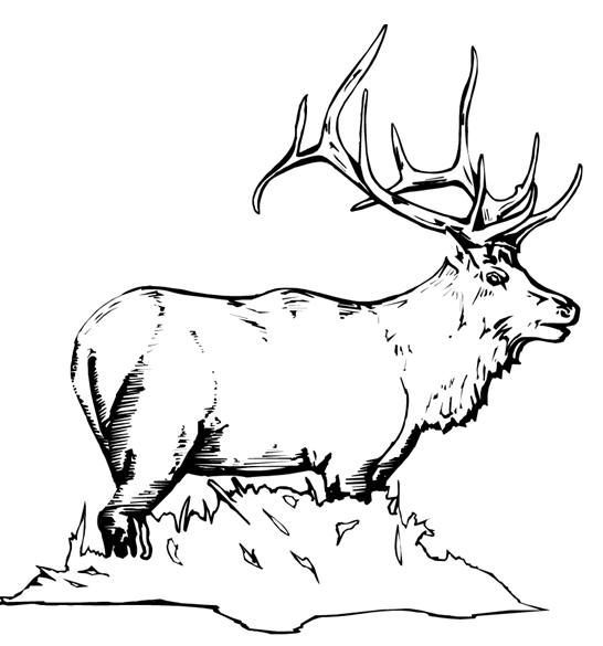 Midwinter night pencil clipart with elk no copyright vector free Free Animal Coloring Pages - Elk thru Mouse: | Elk | Deer ... vector free