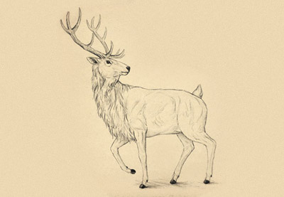 Midwinter night pencil clipart with elk no copyright svg black and white library How to Draw a Deer Step by Step svg black and white library
