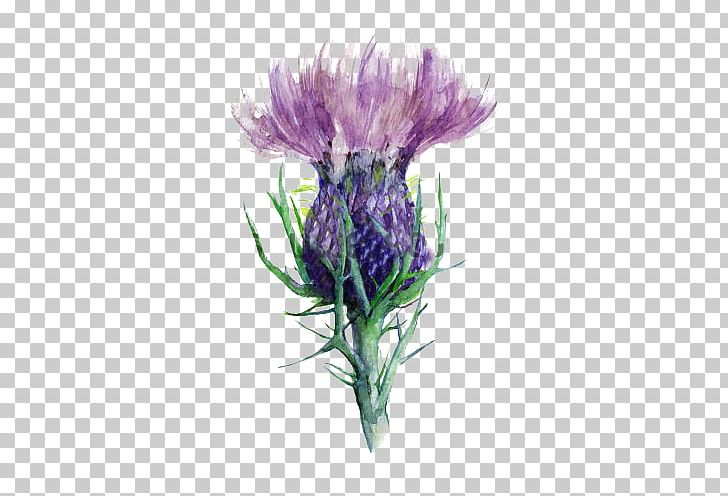 Milk thistle clipart