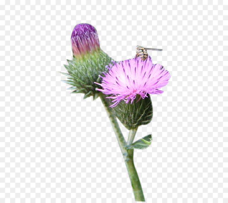 Milk thistle clipart clip download Flowers Clipart Background png download - 800*800 - Free ... clip download