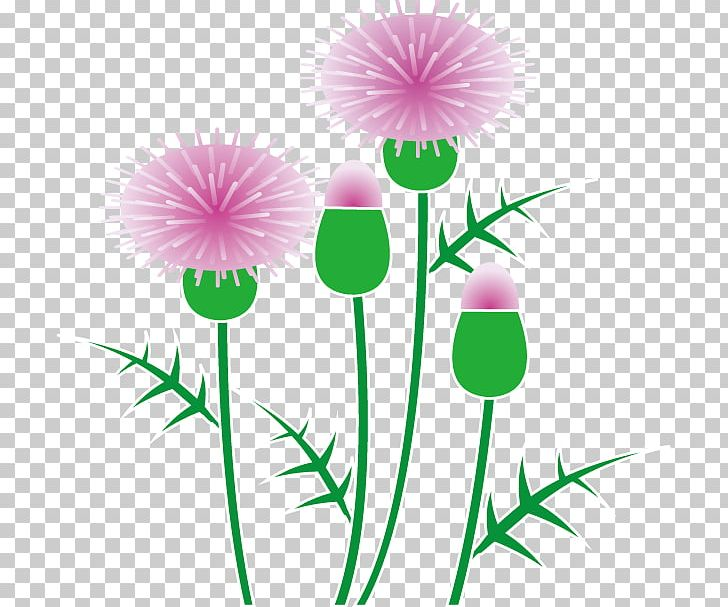 Milk thistle clipart image black and white download Scotland Milk Thistle PNG, Clipart, Artwork, Border Flowers ... image black and white download