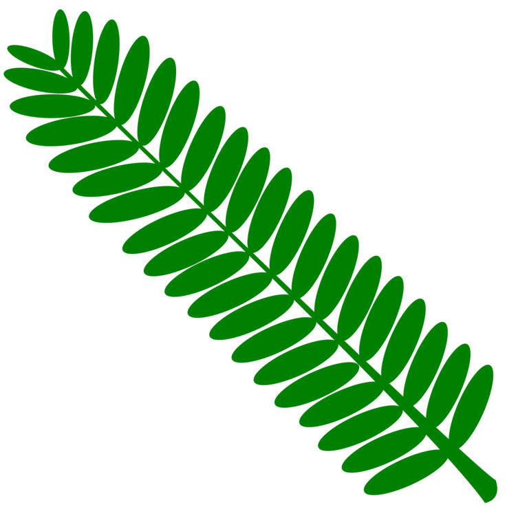 Mimosa tree clipart png library library Plant,Leaf,Tree Clipart - Royalty Free SVG / Transparent ... png library library