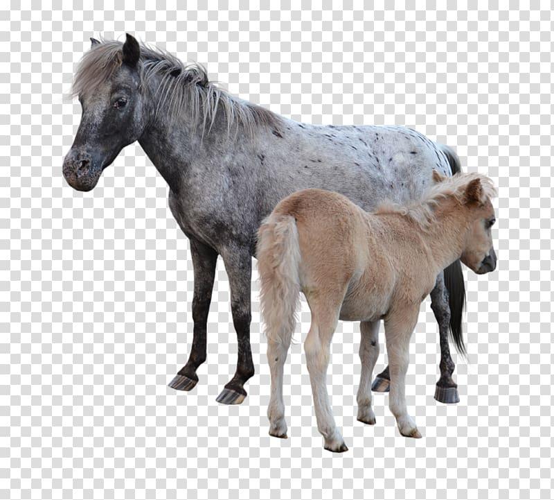 Miniature horse clipart clip art transparent stock American Miniature Horse Pony Mustang Foal Colt, mustang transparent ... clip art transparent stock