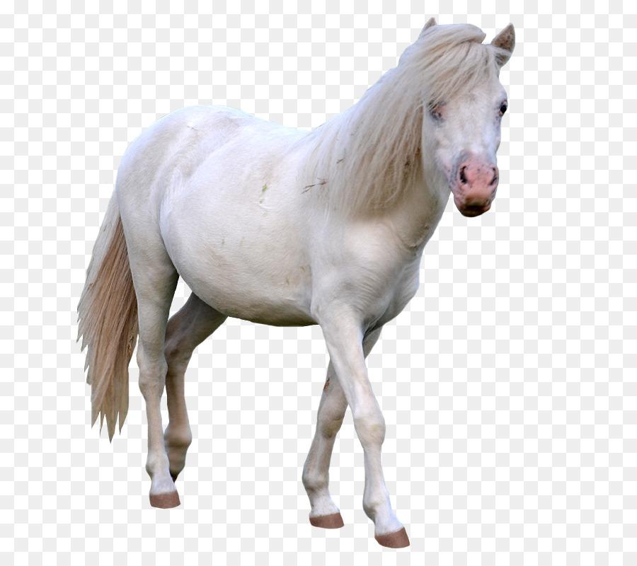 Miniature horse clipart clip transparent stock Horse Cartoon clipart - Horse, transparent clip art clip transparent stock