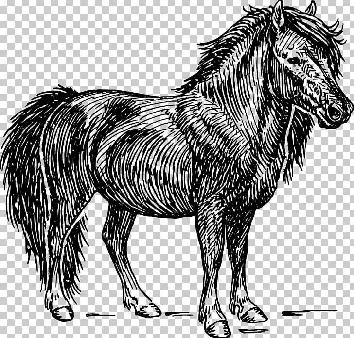 Miniature horse clipart clip art freeuse download Shetland Pony American Miniature Horse Graphics PNG, Clipart, Black ... clip art freeuse download