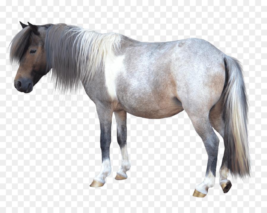 Miniature horse clipart clipart royalty free Horse Cartoon clipart - Horse, transparent clip art clipart royalty free