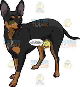 Miniature pinscher clipart graphic free An Attentive Pinscher Dog graphic free